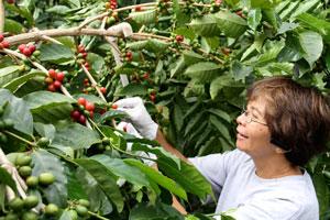 lorieobra-coffeeplants-sm.jpg